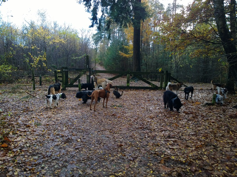 hotdogs wandeling 11 november 2013 04.jpg