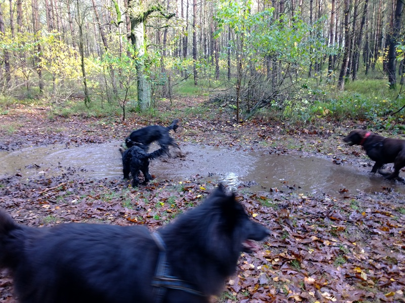 hotdogs wandeling 11 november 2013 14.jpg