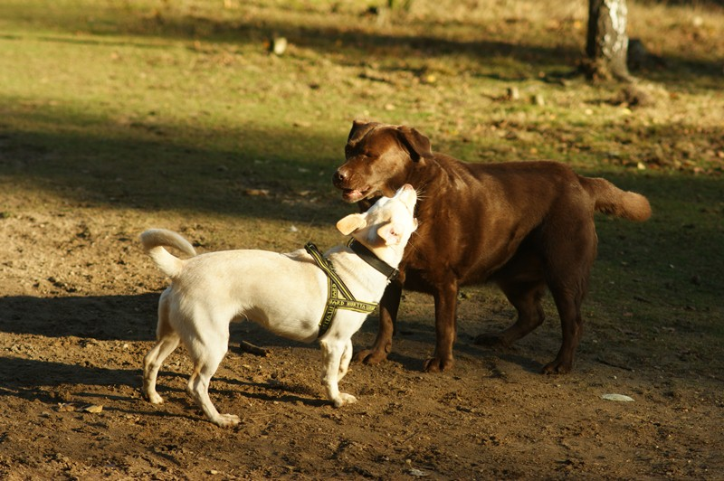 hotdogs wandeling 22 november 2012 08.jpg