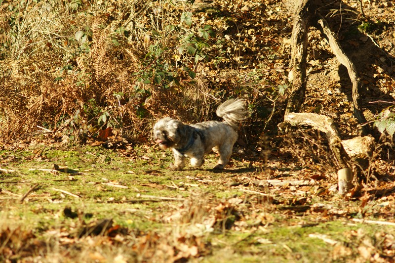 hotdogs wandeling 22 november 2012 14.jpg