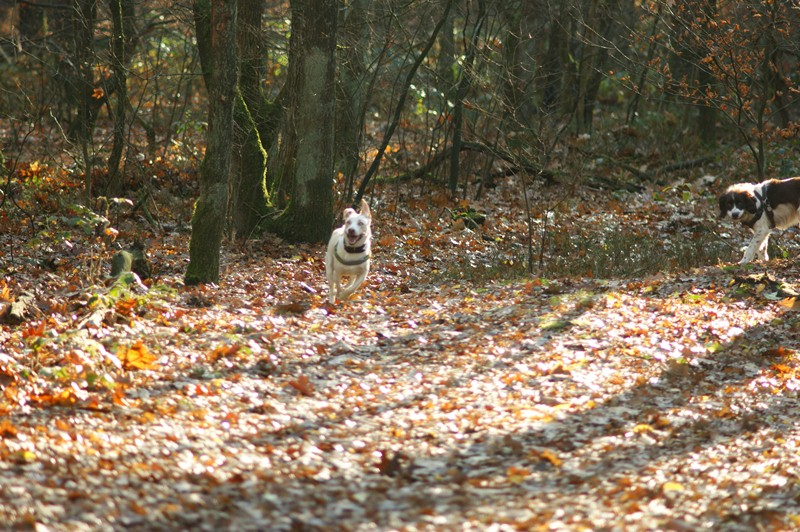 hotdogs wandeling 22 november 2012 19.jpg
