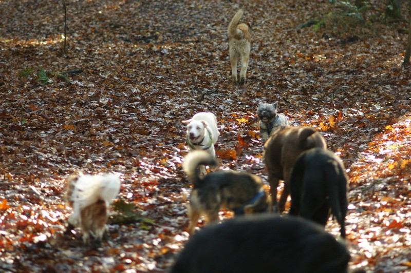 hotdogs wandeling 22 november 2012 21.jpg
