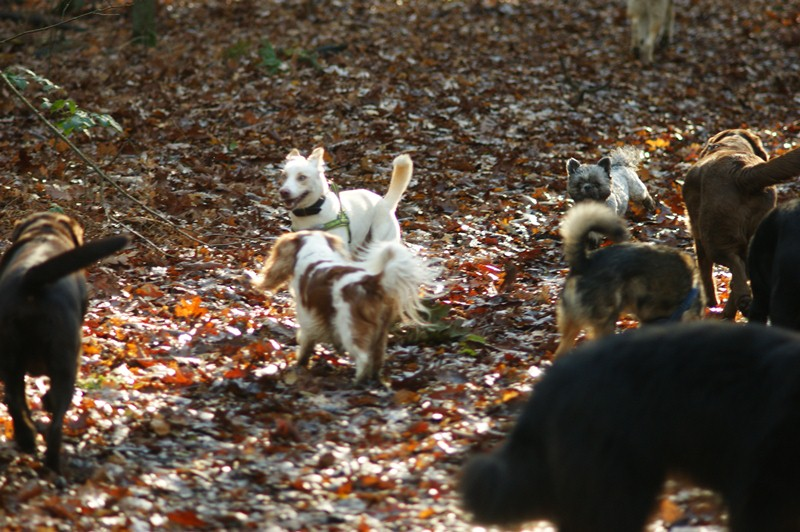 hotdogs wandeling 22 november 2012 22.jpg
