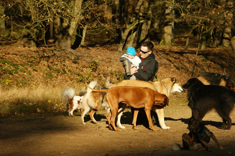 hotdogs wandeling 22 november 2012 25.jpg