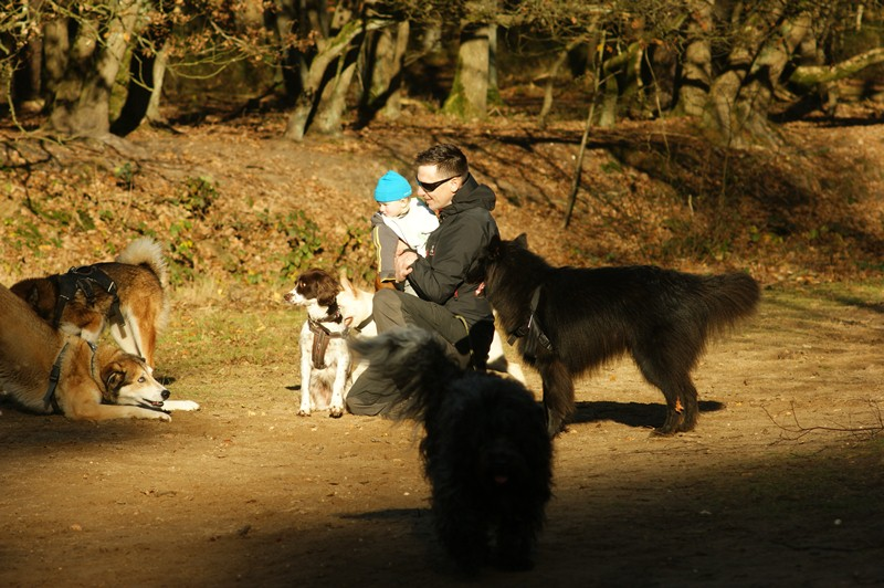 hotdogs wandeling 22 november 2012 29.jpg